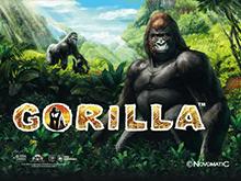 Gorilla игровой автомат играть онлайн